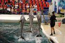 Dolphinarium Varna