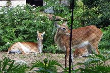 Zoo Sofia, Sofia, Bulgaria