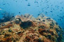 EcoSea Diver, Koh Rong Samloem, Cambodia