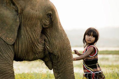 Airavata Elephant Foundation, Banlung, Cambodia