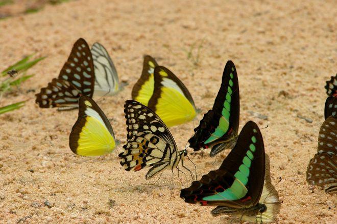Banteay Srey Butterfly Centre, Siem Reap, Cambodia