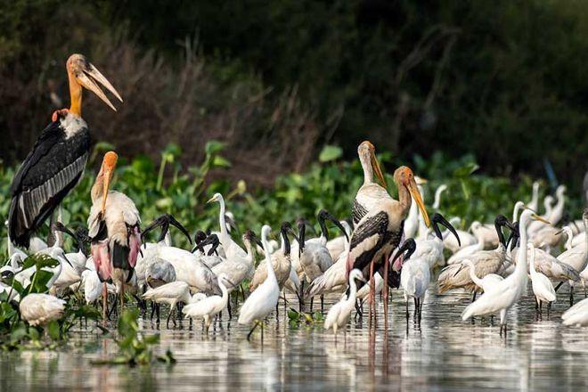 Cambodia Bird Guide Association, Siem Reap, Cambodia