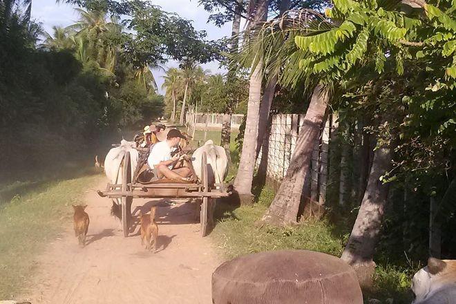 Ox Cart Adventure Tours, Siem Reap, Cambodia