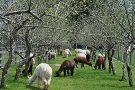 Old Mill Alpacas