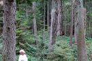 Pacific Rainforest Adventure Tours Inc