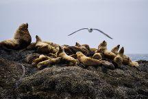 Adventure Tofino - Wildlife Tours