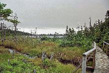 Berry Hill Pond Trail, Rocky Harbour, Canada