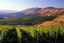Experience Wine Tours
