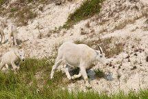 Goat Lick, Jasper National Park, Canada