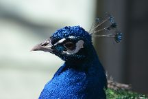 Jack Miner Bird Sanctuary, Kingsville, Canada