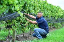 Mastronardi Estate Winery, Kingsville, Canada