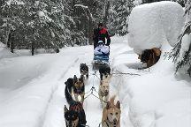 North Ridge Ranch - Dog Sledding, Huntsville, Canada