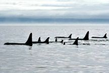 Orca Spirit Adventures