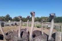 Ostrich Land, Lincoln, Canada