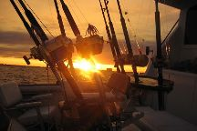 Reel Addiction Sport Fishing