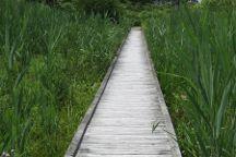 Ruscom Shores Conservation Area, Lakeshore, Canada
