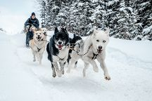 Snowy Owl Sled Dog Tours