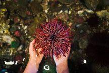 Ucluelet Aquarium, Ucluelet, Canada