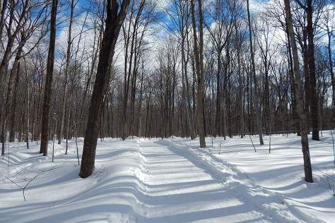 Bois de Belle-Riviere, Mirabel, Canada