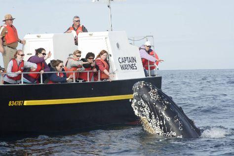 Captain Wayne's Marine Excursions, Bay Bulls, Canada