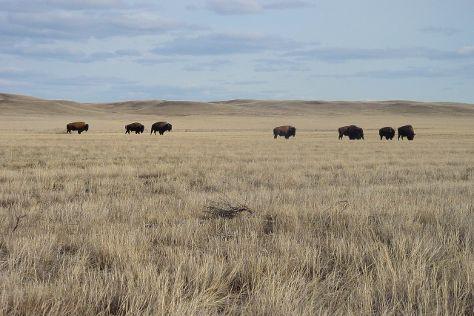 Grasslands National Park, Saskatchewan, Canada