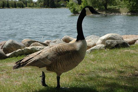 Henderson Lake Park, Lethbridge, Canada