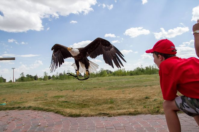 Alberta Birds of Prey Visitor's Centre, Coaldale, Canada