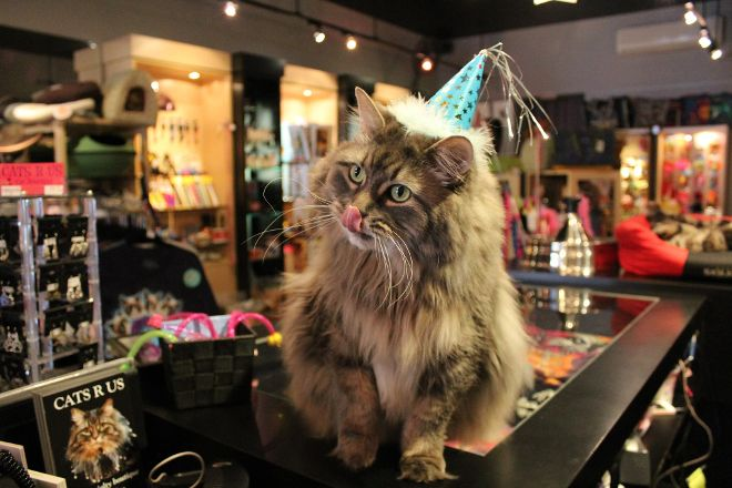 Cats R Us Cat Boutique, Ottawa, Canada