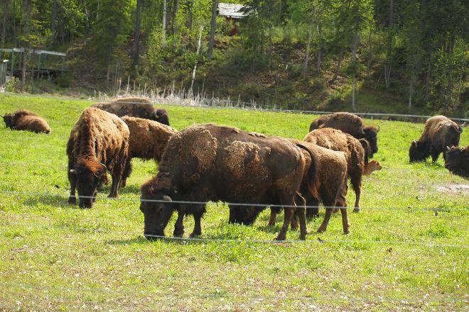 Kamloops Wildlife Park, Kamloops, Canada
