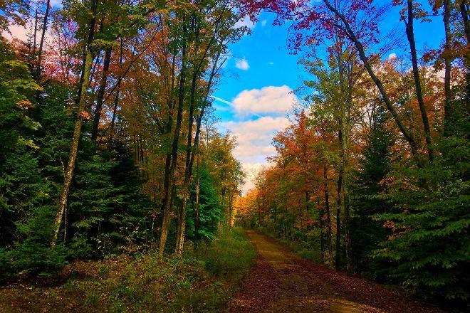 Limberlost Forest & Wildlife Reserve, Huntsville, Canada