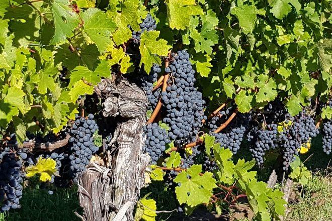 Niagara Getaway Wine Tours, Niagara-on-the-Lake, Canada
