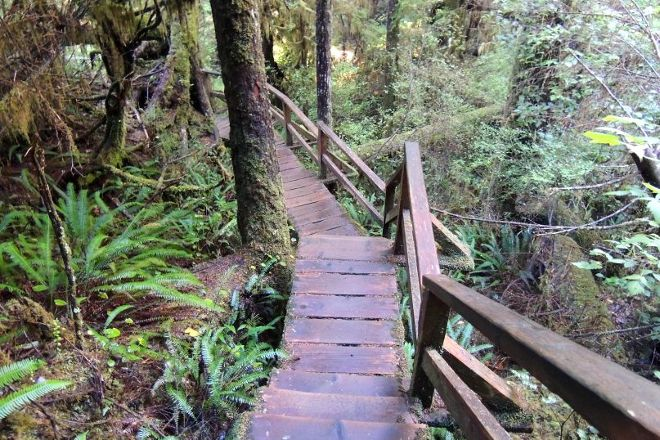 Rainforest Trail, Tofino, Canada