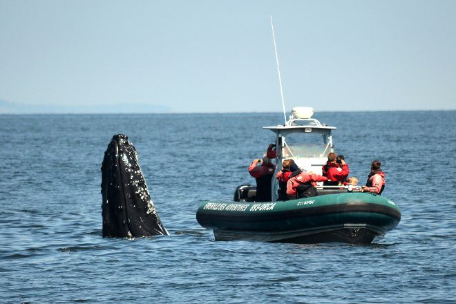 Sidney Whale Watching, Sidney, Canada