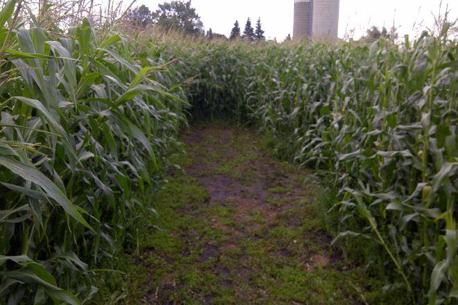 The Amazing Field Maze, Leduc, Canada