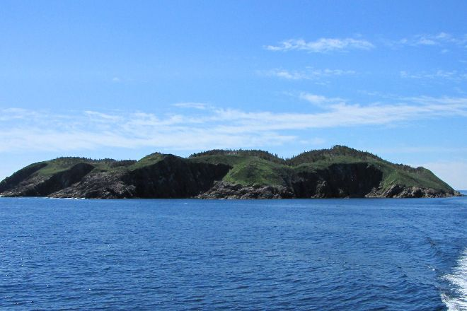 Witless Bay ecological reserve, Witless Bay, Canada