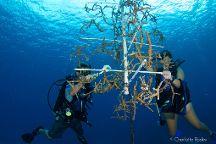 Grand Cayman Eco Divers