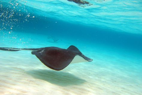 Stingray City, Grand Cayman, Cayman Islands