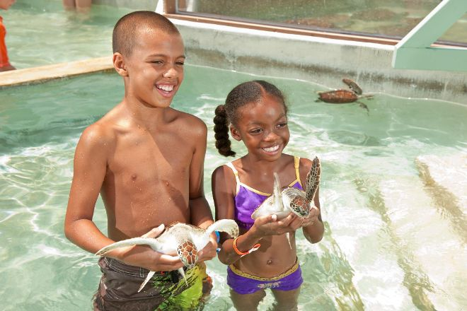 Cayman Turtle Centre: Island Wildlife Encounter, West Bay, Cayman Islands