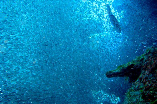 Devil's Grotto, Grand Cayman, Cayman Islands