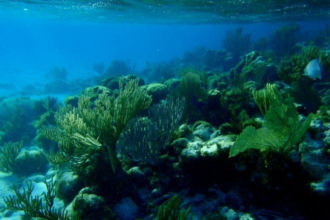 Mixing Bowl, Little Cayman, Cayman Islands