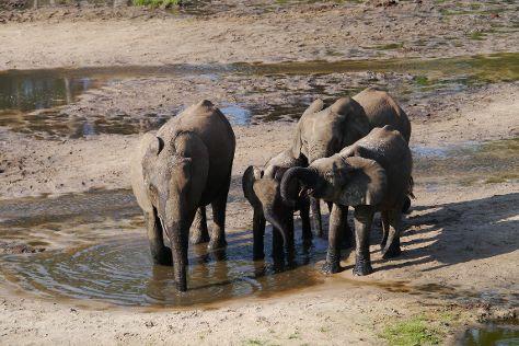 Dzanga-Sangha Reserve, Bayanga, Central African Republic