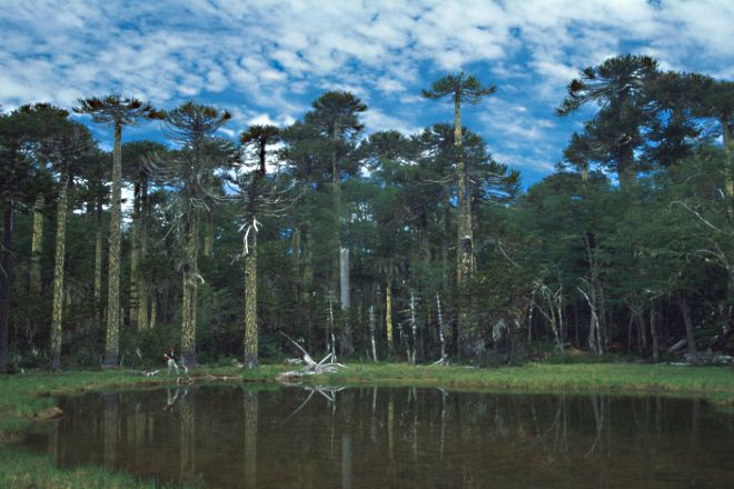 Huerquehue National Park, Pucon, Chile