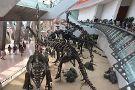 Tianjin Natural Museum