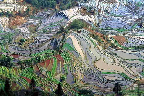 Yuanyang Rice Terraces, Yuanyang County, China