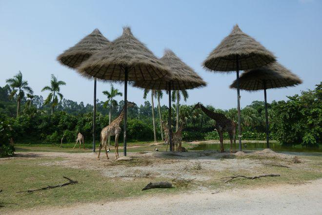Chimelong Safari Park, Guangzhou, China