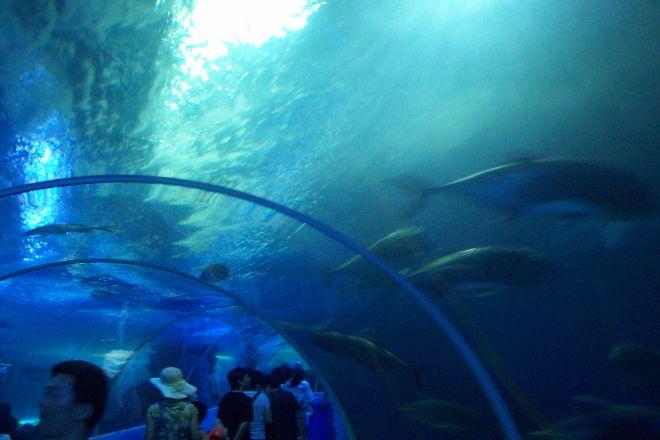 Qingdao Underwater World, Qingdao, China