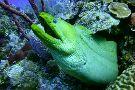 Sharky Dive Shop