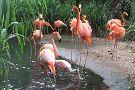 Zoologico de Barranquilla