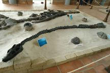 Museo El Fosil