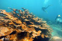 Santa Marta Dive and Adventure